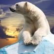 Polar bear — Stock Photo #8143324