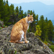 Lynx in wildness area — Stock Photo #8143343