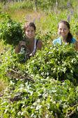 Women making birch besom — Stock Photo