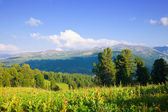 Mountains with cedar forest — Stock Photo