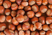 Background of hazelnuts — Stock Photo