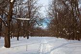 在冬日的橡树林 — 图库照片