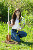 Young woman setting tree — Stock Photo