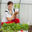 Woman with tomato seedlings — Stock Photo #9001756