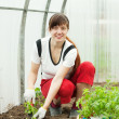 Stock Photo: Fem ale gardener planting tomato spouts