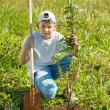 Teen boy   setting tree - Stock Photo