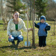 Foto Stock: Mother and son planting tree