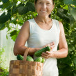 Royalty-Free Stock Photo: Woman with harvested cucumbers