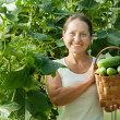 Stock Photo: Woman with harvested cucumbers