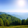 Forest mountains in sunny day — Stock Photo #9009330