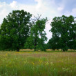 Stock Photo: Summer landscape with oaks