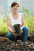 Woman with sprouts in pots — Stock Photo