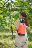 Woman spraying tree — Stock Photo