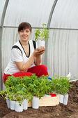 Donna con piantine di pomodoro — Foto Stock