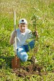 Teen boy setting tree — Stock Photo