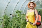 Gardener spraying tomato plant — Stock Photo