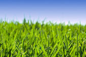 Grass meadow under blue sky — Stockfoto