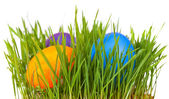 Easter eggs in green grass — Stok fotoğraf