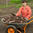 Woman with beetroot harvest — Stock Photo #9890989