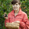 Woman picking chokeberry — Stock Photo