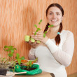Gardener with various seedlings - Foto Stock