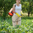 Woman spraying potato plant — Stock Photo