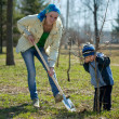 Stock Photo: Woman with her son resetting tree