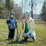 Женщина и мальчик, посадить дерево — Стоковое фото #9892357