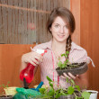 Female gardener with  seedlings - Stockfoto