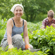 Stock Photo: Women working in vegetable garden