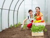 Due donne di piantatura dei semenzali — Foto Stock
