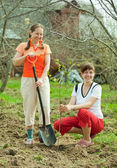 Happy women planting fruit tree — Stock Photo