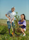 Woman with teenager son setting tree — Stock fotografie