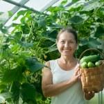 Woman harvesting cucumbers — Stock Photo #9912277