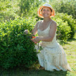 Mature woman  cutting shrubbery - Stock Photo