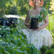 Gardener with Parthenocissus tricuspidata sprouts - Stock Photo