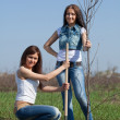 Women planting tree outdoor — Stock Photo