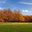 Stock Photo: Autumn lanscape