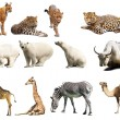 Set of  animals. Isolated over white — Stok fotoğraf