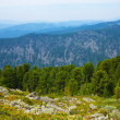Stock Photo: Landscape with forest mountains