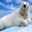Polar bear — Stock Photo #9913979