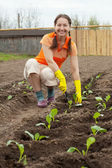 Woman planting cabbage — Stock Photo