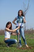 Women planting tree outdoor — Foto Stock