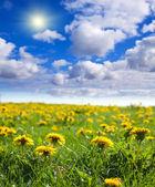 Summer landscape with dandelion meadow — Stock Photo