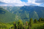 Top view of forest mountains — Stock Photo