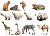 Set of animals. Isolated over white — Stock Photo