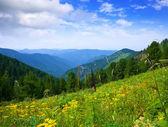 Paisagem de montanhas simples — Foto Stock