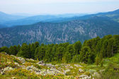 Landscape with forest mountains — Stock Photo