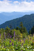 Forest mountains — Stock Photo