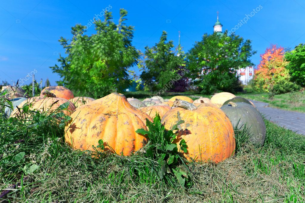Big orange pumpkin in the sun — Stock Photo #9130312